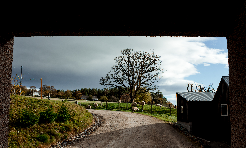 wedding farm view